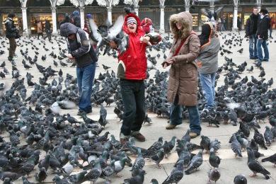 r4z0ybxv702d Se débarrasser des Pigeons La Valette-du-Var